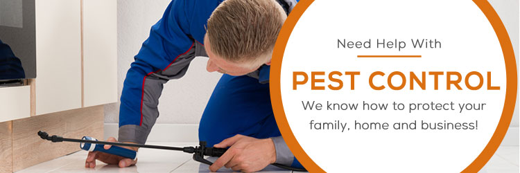Pest Control Highgate Hill