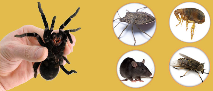 Pest Control Wandana Heights