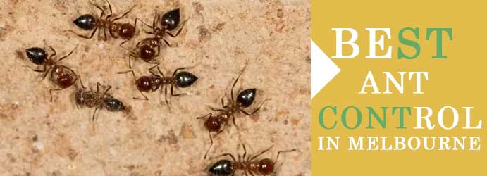 Best Ant Control In Melbourne