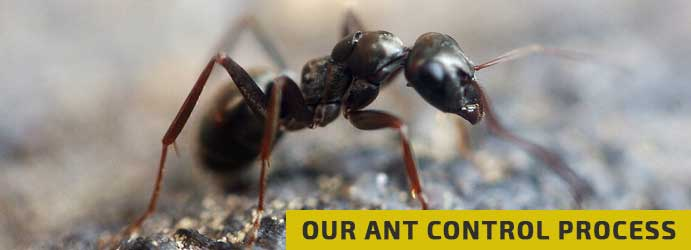 Our Ant Control Process in Melbourne