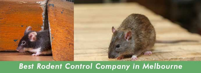 Best Rodent Control in Melbourne