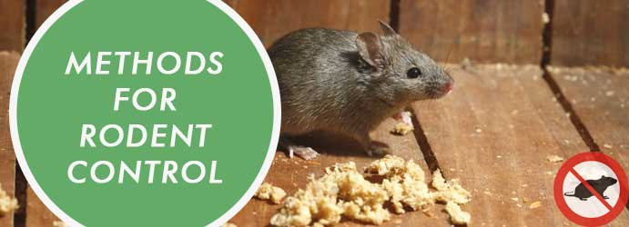 Methods Of Rodent Control in Melbourne