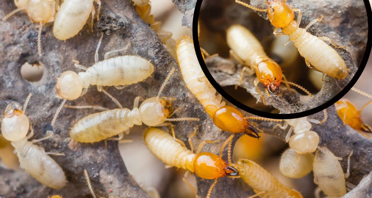 Best Get Rid of the Termite