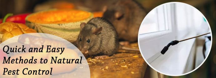 Mice Pest Prevention Control Brisbane