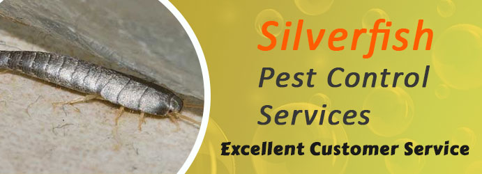 Professional Silverfish Pest Control