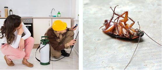 Best Pest Control Harristown