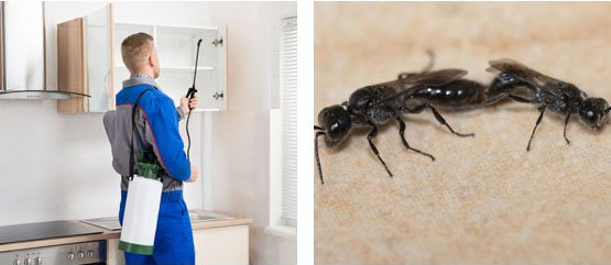Domestic Pest Control Fairfield Gardens