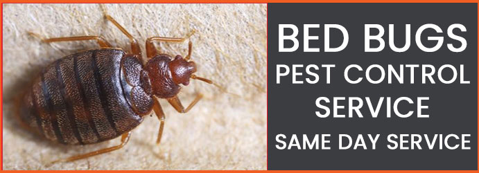 Bed Bugs Pest Control Service