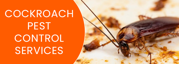 Cockroach Pest Control Loch Valley