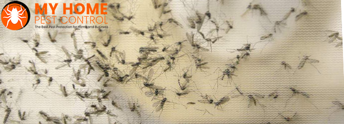 Mosquitoes Infestation Control