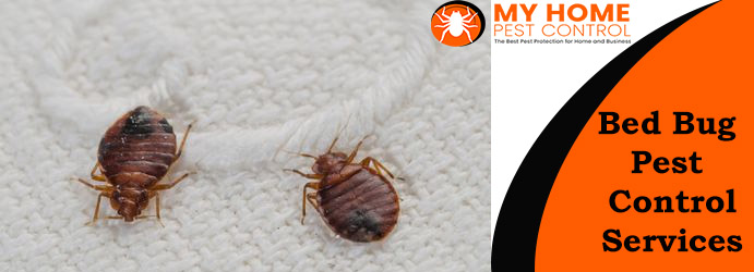 Professional Bed Bugs Control Services