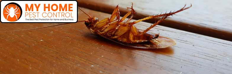 Cockroach Pest Control Adelaide