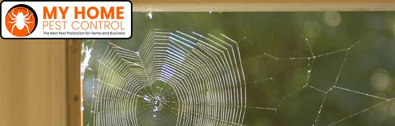 Spider Pest Control Port Arthur