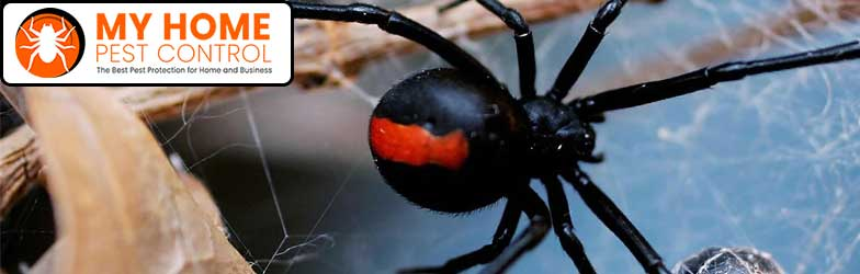 Spider Pest Control Red Hill