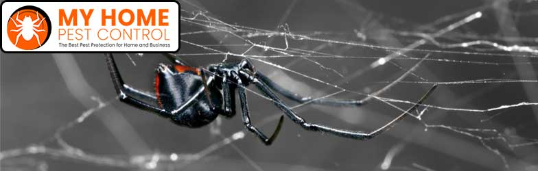 Spider Pest Control North Perth