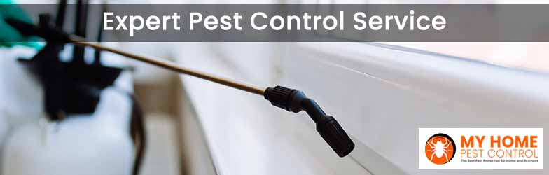 Expert Pest Control Service Williamsdale
