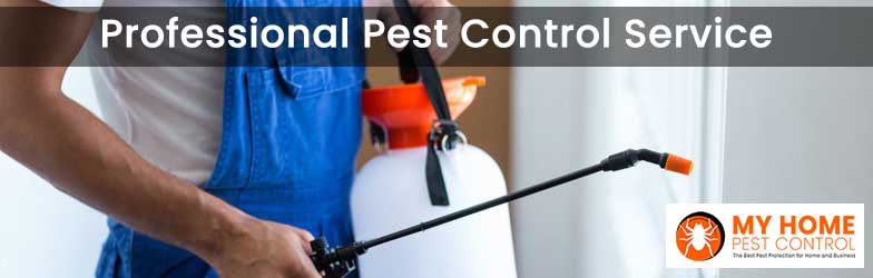 Professional Pest Control Service Williamsdale