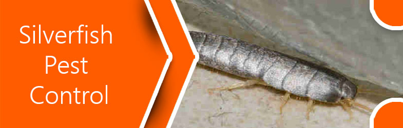 Identification and Treatments Taken by Silverfish Pest Control Services